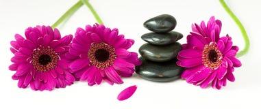 Balancierende Kiesel und Gänseblümchenblumen Lizenzfreies Stockbild
