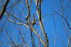 Balancing Bird Royalty Free Stock Images
