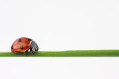 Balancing bug Stock Photos