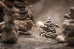 Balancing cairns in the forest royalty free stock photo
