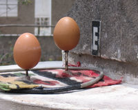 Balancing Eggs Royalty Free Stock Photo