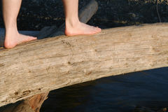 Balancing on log Stock Photography