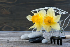 Balancing pebble stones and yellow flowers Royalty Free Stock Image