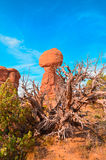 Balancing stone on the front of the photos of a dry tree on the territory of Arches National Park Royalty Free Stock Images