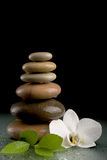 Balancing zen stones on black with white flower Stock Photography