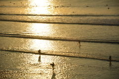 Balangan beach. Sunset. Surfers Royalty Free Stock Images