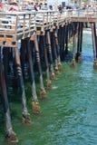 Balani in pilastro verde della spiaggia di Pismo dell'acqua Fotografia Stock Libera da Diritti