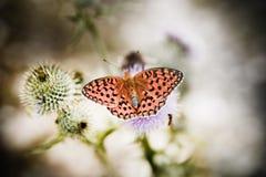 balanserad fjärilsblomma arkivbilder