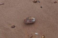 Balanus sticked op de steen stock afbeelding