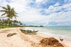 Balapitiya, Sri Lanka kobieta i pies przy plażą Balapi - Zdjęcie Stock