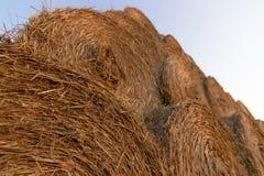 Balas da palha na terra Bala da palha Straw Bales Pacotes da palha do foco seletivo empilhados na pilha Fotos de Stock Royalty Free