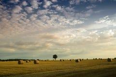Balas de feno em um campo Fotografia de Stock
