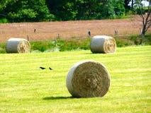 Balas de feno em um campo Foto de Stock