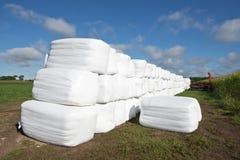 Balas de feno modernas da exploração agrícola de leiteria em uns sacos de plástico Fotografia de Stock Royalty Free