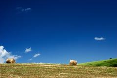 Balas de feno no campo Foto de Stock
