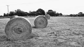 Balas de feno redondas Foto de Stock