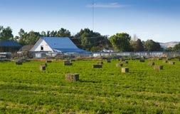 Balas de heno de la alfalfa en campo del rancho Fotos de archivo libres de regalías