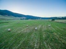 Balas de heno dispersadas en campo verde Foto de archivo
