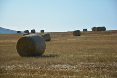 Balas de heno en campo cosechado con muchas balas de heno en horizont Fotos de archivo