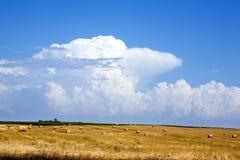 Balas de heno en campo de trigo Foto de archivo libre de regalías