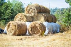 Balas de heno en el campo después de la cosecha Imagenes de archivo