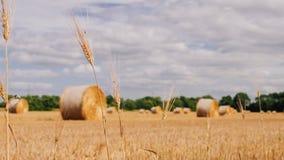 Balas de heno en un campo de trigo Las balas de heno rodaron y alistan para ser embaladas en los granjeros colocan en verano Foto de archivo libre de regalías