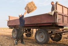 Balas de heno jovenes y fuertes del tiro del granjero en un tractor remolque - b Fotos de archivo libres de regalías