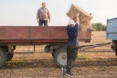 Balas de heno jovenes y fuertes del tiro del granjero en un tractor remolque - b Foto de archivo libre de regalías