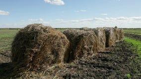 Balas de heno redondas en el campo verde en Rusia almacen de metraje de vídeo