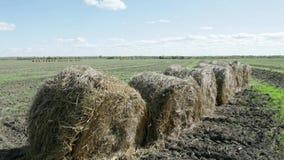 Balas de heno redondas en el campo verde en Rusia metrajes