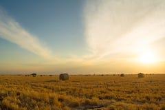 Balas de la cebada en la puesta del sol Foto de archivo libre de regalías