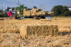 Balas de la paja del arroz en el funcionamiento del campo y del granjero del arroz, diseño natural Imágenes de archivo libres de regalías