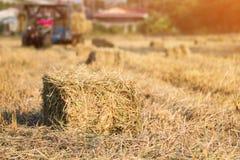 Balas de la paja del arroz en el funcionamiento del campo y del granjero del arroz, diseño natural Foto de archivo libre de regalías