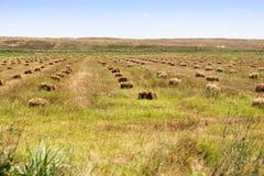 Balas de paja en el campo en la naturaleza Foto de archivo