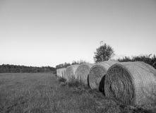 Balas de Rye en un campo en el sur imagen de archivo