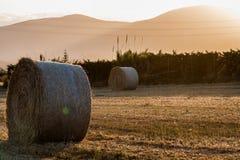 Balas de trigo Fotografía de archivo libre de regalías