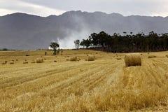 Balas do feno em um campo de trigo Fotografia de Stock