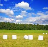 Balas do feno no campo Imagem de Stock