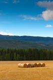 Balas empiladas de paja en el campo segado. Imagen de archivo libre de regalías