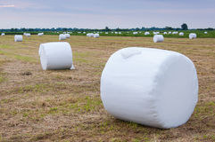Balas envueltas de heno en un prado holandés imagen de archivo