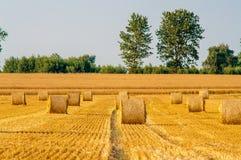 Balas redondas da palha em campos colhidos foto de stock