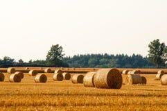 Balas redondas da palha em campos colhidos fotografia de stock