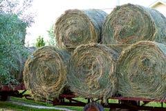 Balas redondas de heno atadas al tractor remolque para el transporte foto de archivo libre de regalías