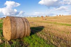 Balas redondas de la paja en un campo segado debajo de un cielo azul con el cl blanco Imágenes de archivo libres de regalías