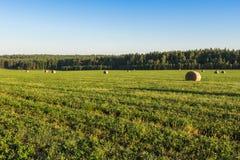 Balas redondas de paja en el prado, Ural, Rusia Foto de archivo libre de regalías