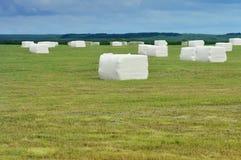 Balas roladas cúbicas da ensilagem no prado Imagem de Stock Royalty Free