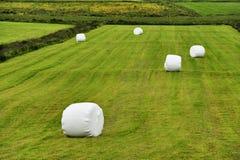 Balas roladas da ensilagem no prado Fotografia de Stock