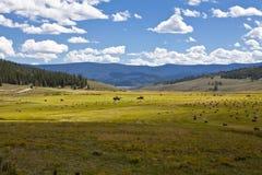 Balas y alimentadores de heno en un pasto de Colorado imagen de archivo libre de regalías
