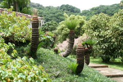 Balata garden, Martinique. Tropical trees in the garden of Balata, Martinique Royalty Free Stock Photo
