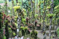 Balataträdgård, Martinique arkivfoto